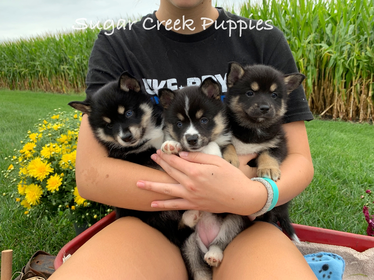 Zoey's Puppies 5